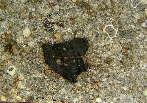 NWA 2933 (L3.3 Regolith Breccia) 19g Slice