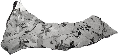 Youndegin (IAB) 76.1g Complete Slice (Syn. Quairading) - Schreibersite/Cohenite Inclusions